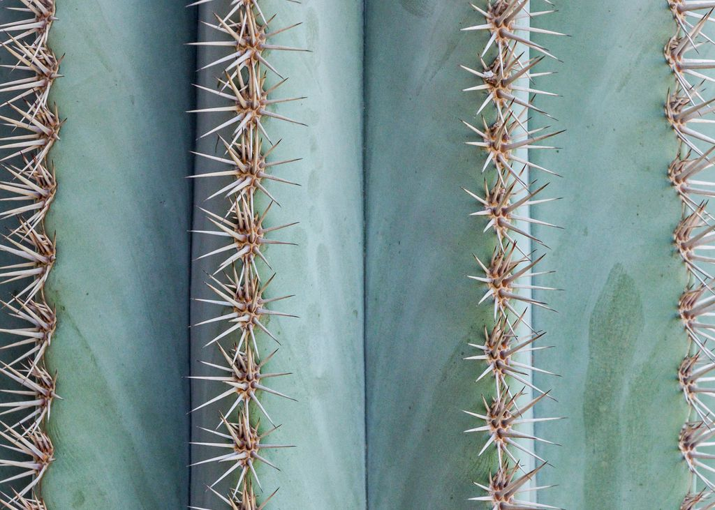 Cactus in close-up