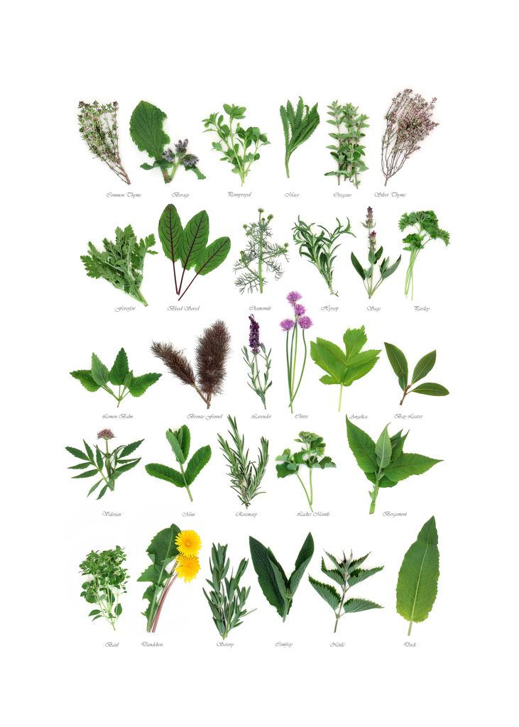 Plants with names