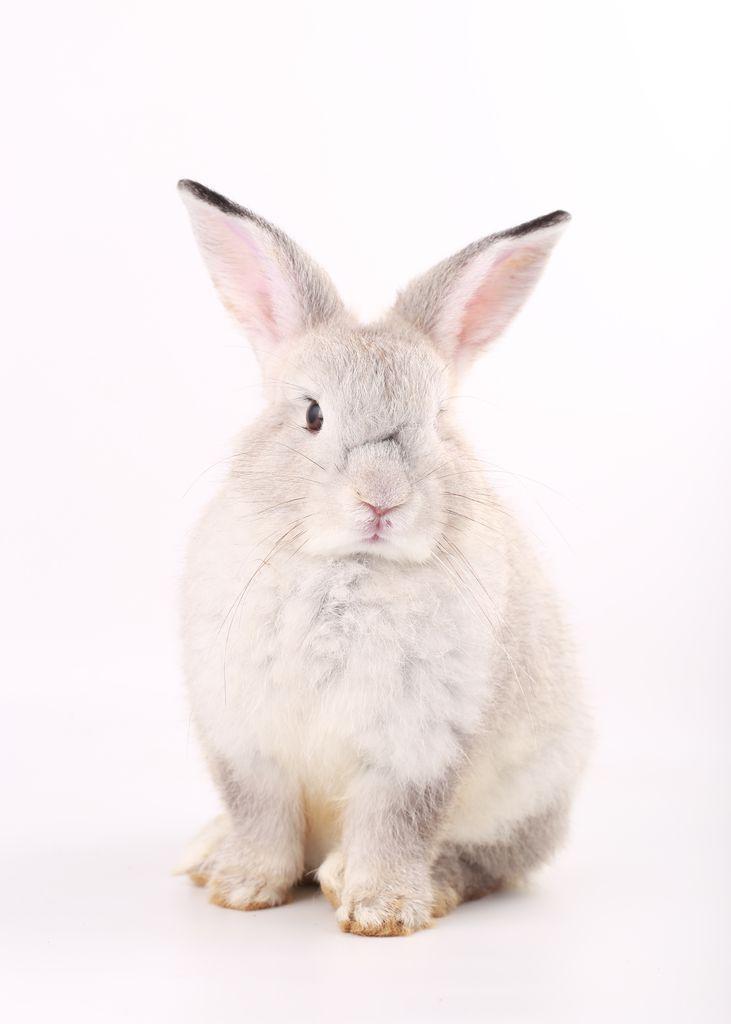 Pink rabbit 2
