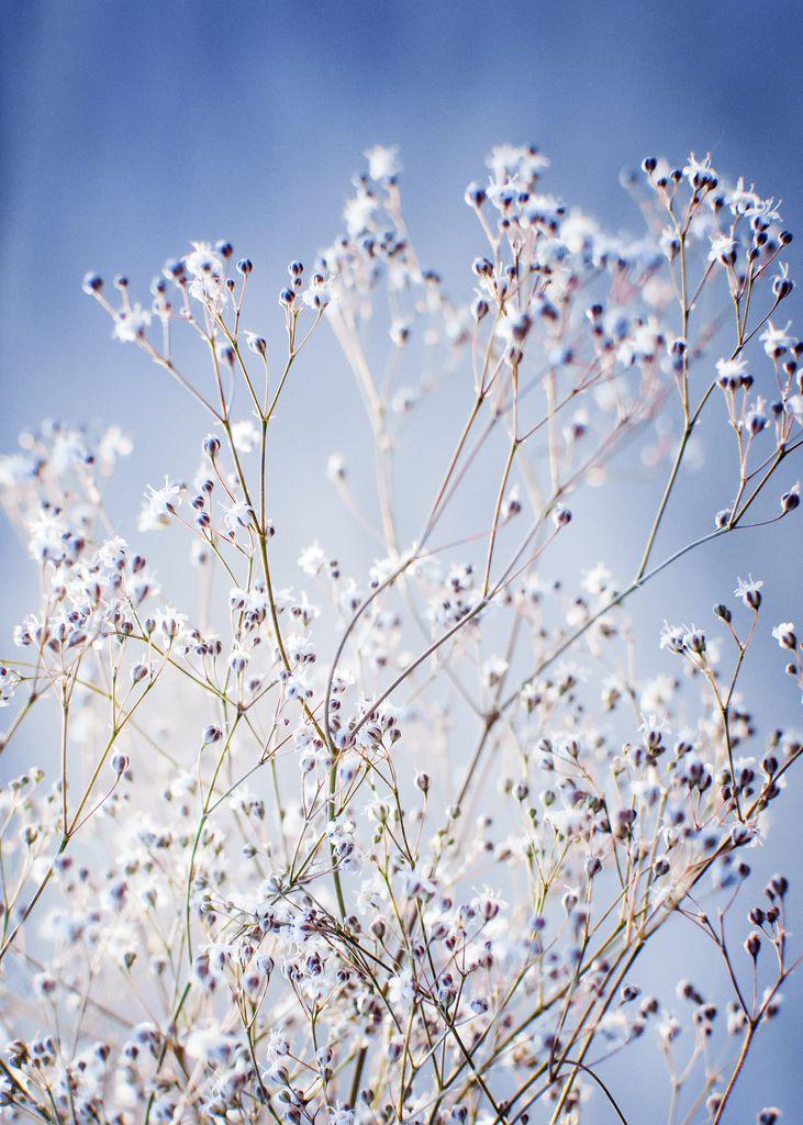 Flower buds 2