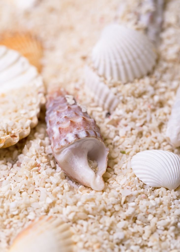 seashell in sand 2