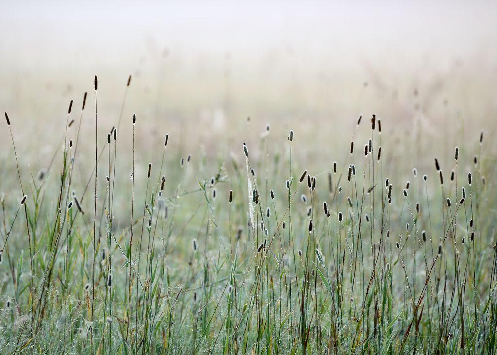 Meadow in morning light 3