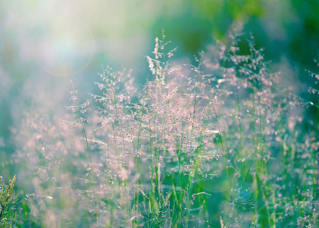 Meadow in morning light 2
