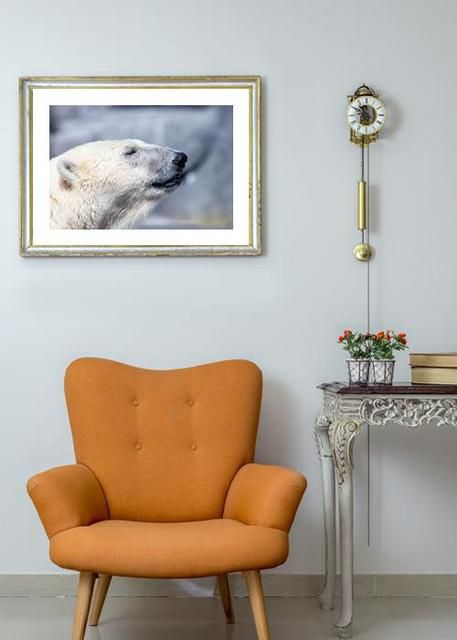 Polar bear at peace Environment