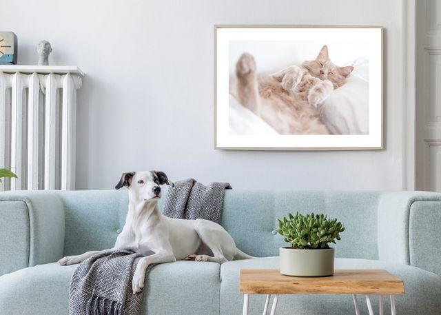 Resting cat Environment