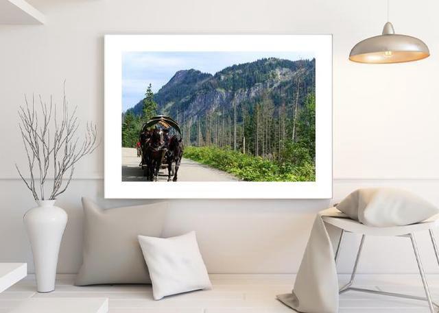 Horses poland Environment