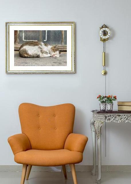 Homeless cat Environment