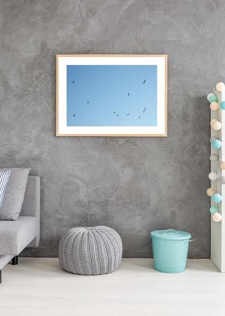 birds Environment