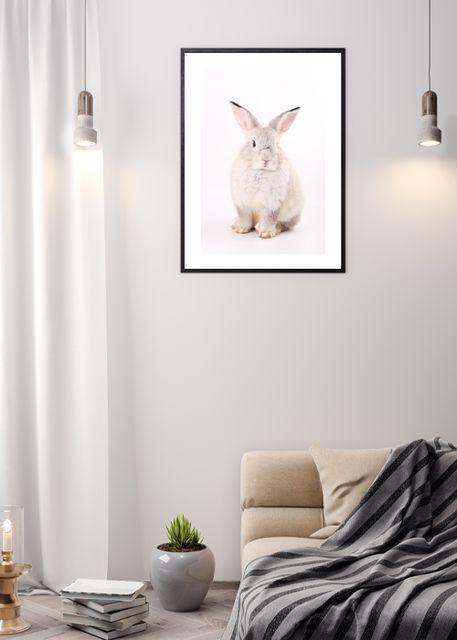 Pink rabbit 2 Environment