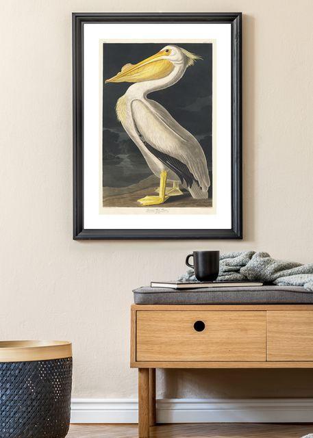 White Pelican Environment
