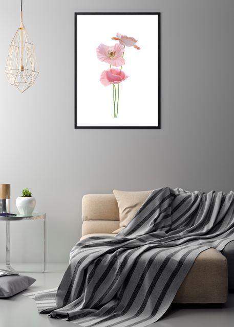 Pink poppy Environment
