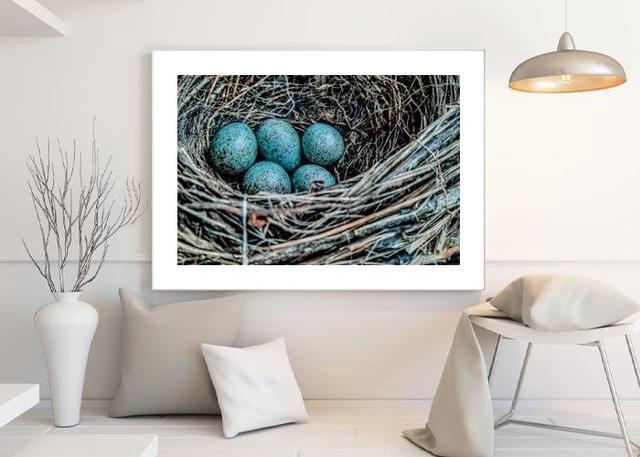 Bird's nest Environment