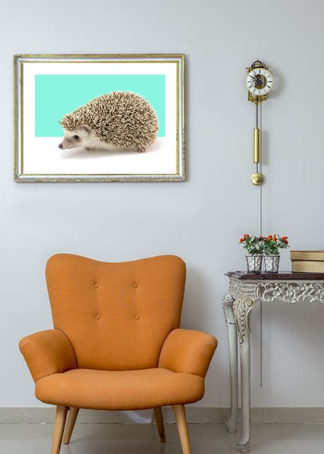 Hedgehog Environment