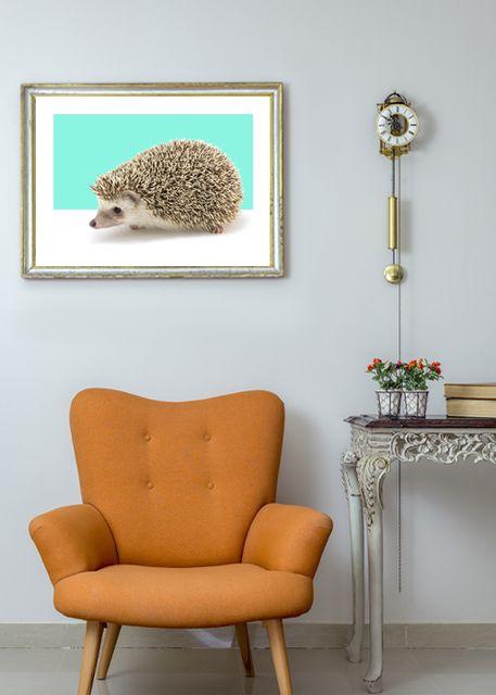 Hedgehog Environment