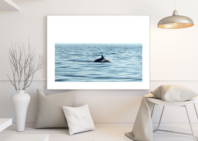 Swimming dolphin in the sea Environment