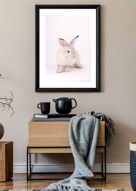 Pink rabbit 1 Environment