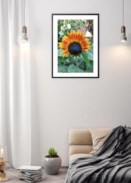 Sunflower Environment