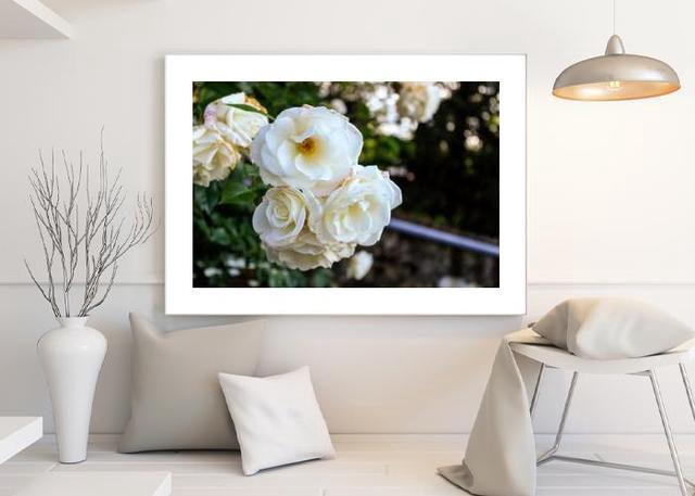 White roses Environment