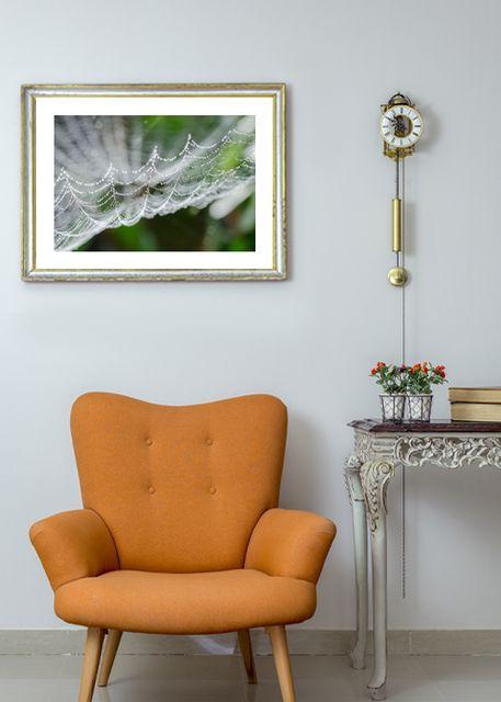 cobweb Environment