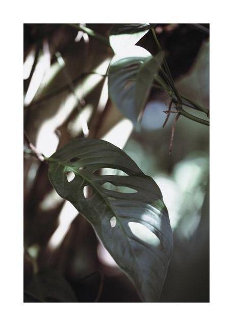 Monstrea Leaves Nature 1