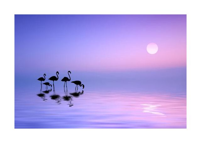 Morning Flamingo