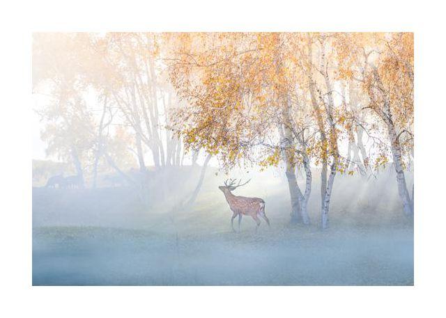 Elk Lost in Mist