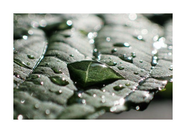 water drops on a leaf 2
