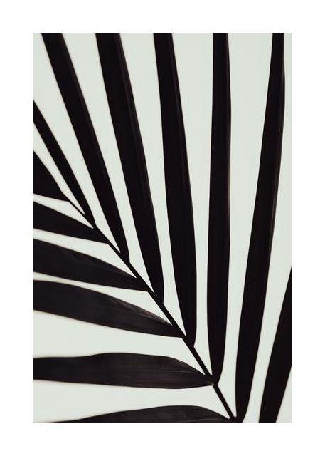 Graphic palm leaf 1