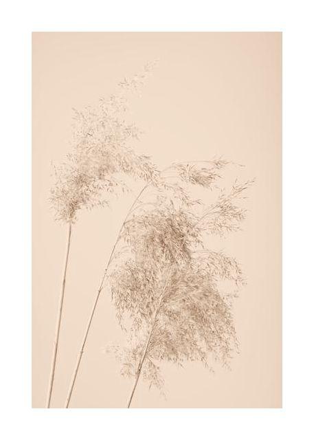 Reed Grass Beige 07