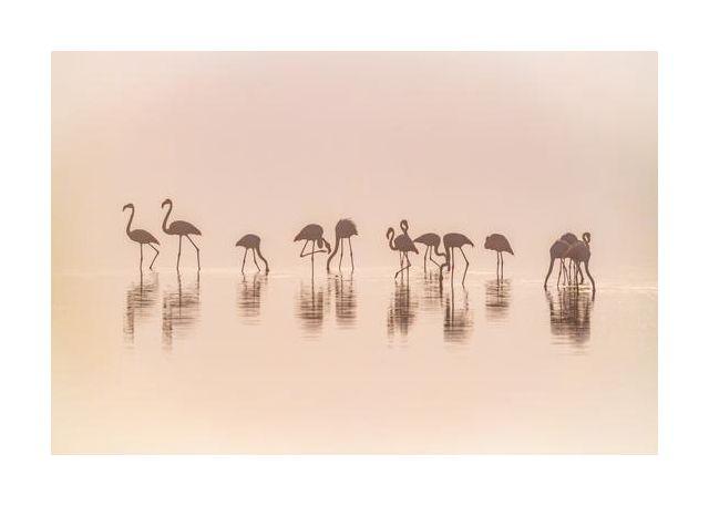 Flamingos in the mist