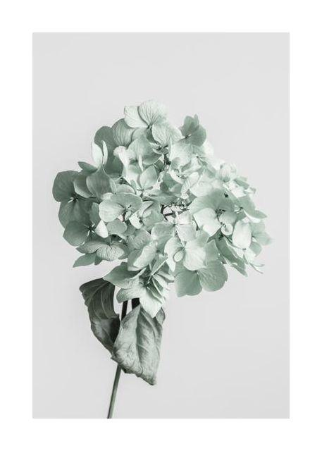 Green dried flower