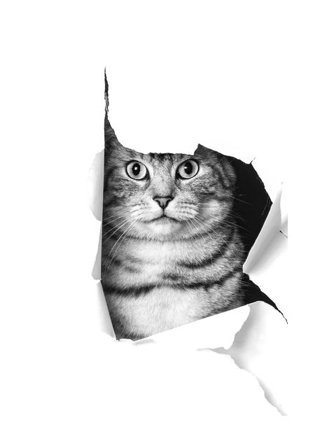 Cat through paper