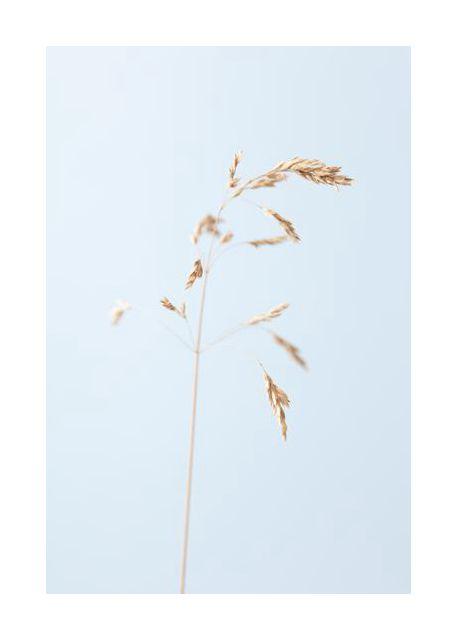 Dried single grass straw 2