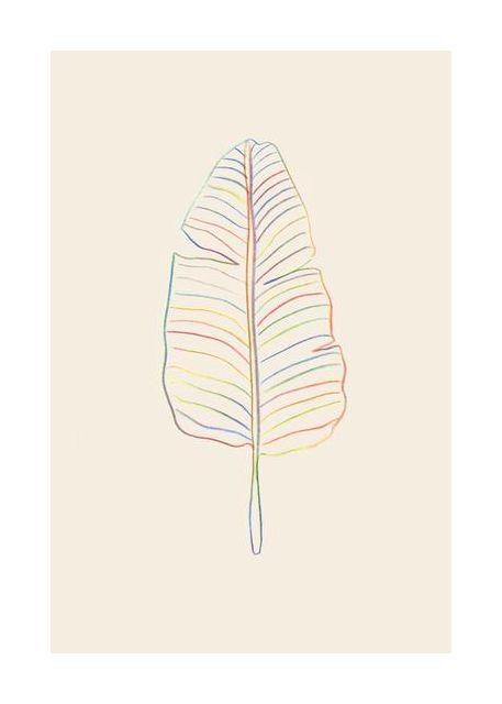 Banana Rainbow Leaf