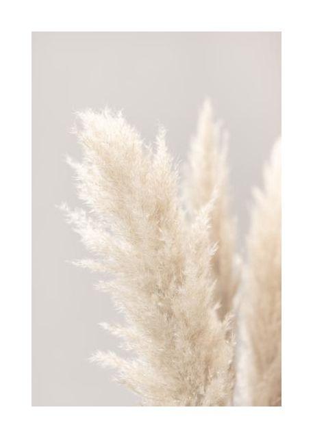 Pampas Grass Grey 03
