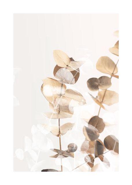 Eucalyptus Creative Gold 01