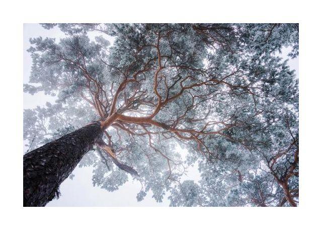 Winter tree lines