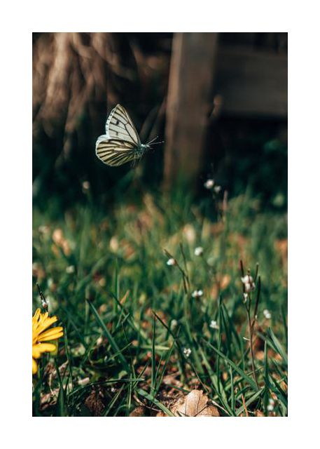 Butterfly on adventure