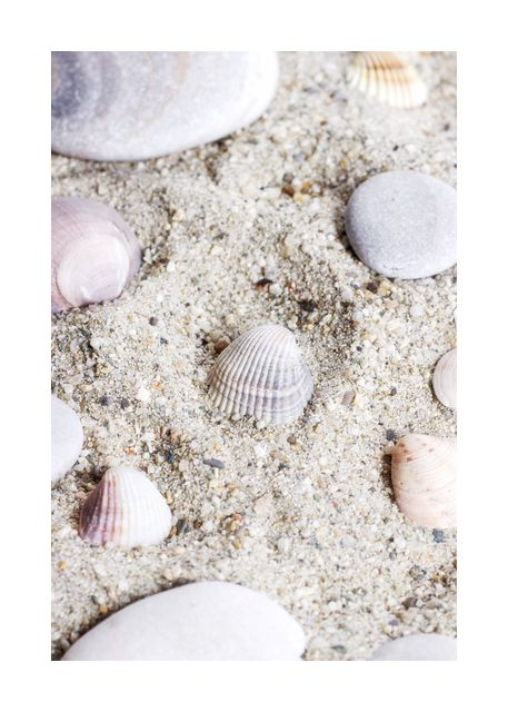 seashell in sand 3