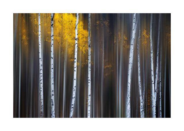 Curtain of Fall