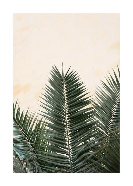 Palm leaves and wall 1
