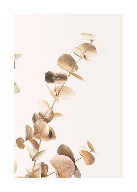 Eucalyptus Gold No 03