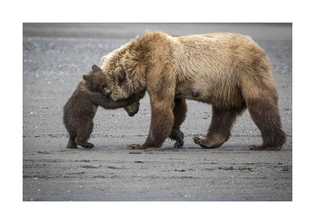 A Little Bear Hug