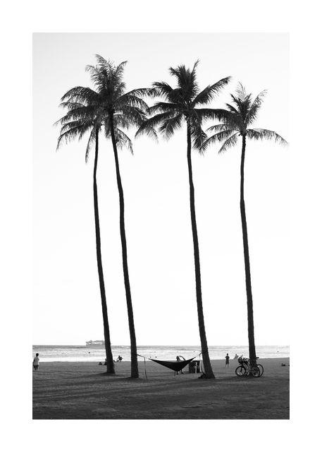 Palm treess