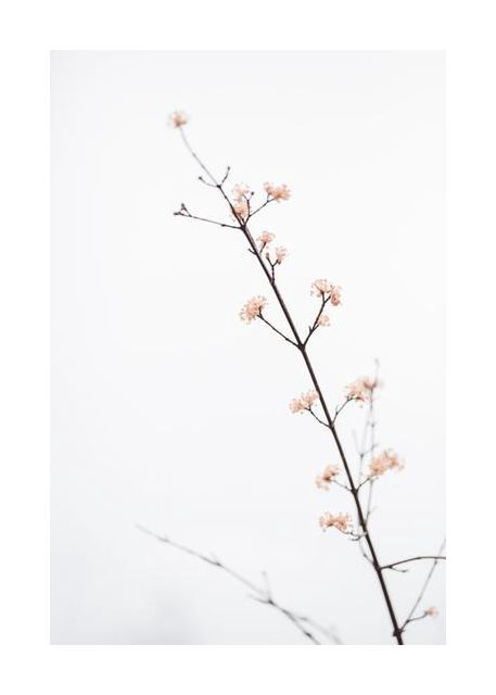 Twig with small flowers