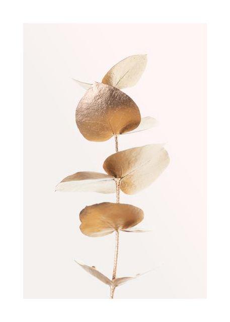 Eucalyptus Gold No 06