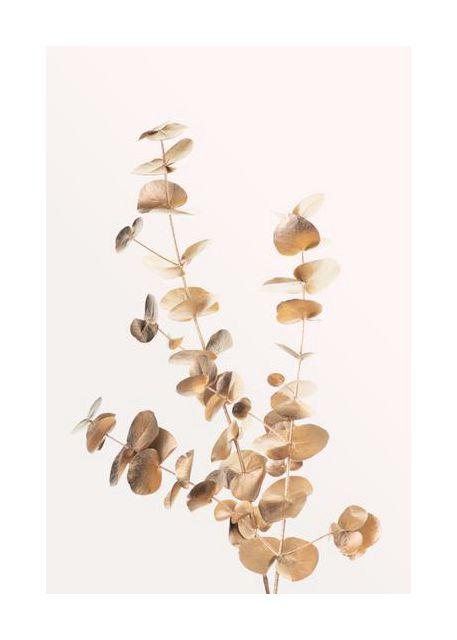 Eucalyptus Gold No 04