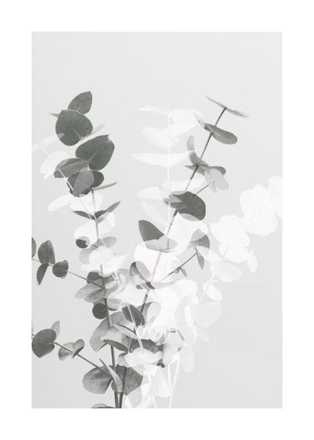 Eucalyptus Creative 08