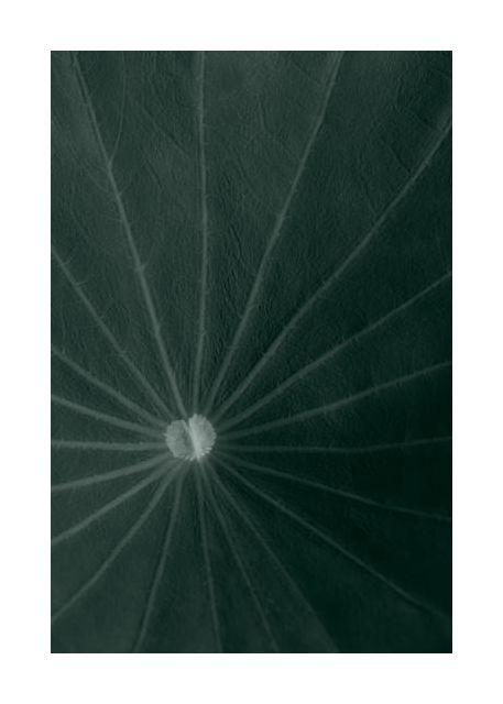 Dark green leaf