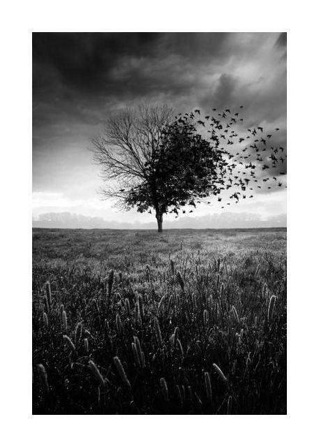 Illusion d'un printemps perdu